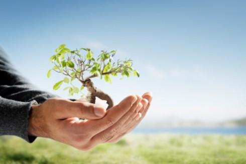 Für eine Ausbildung in der Branche Natur und Umwelt brauchen Bewerber einen grünen Daumen